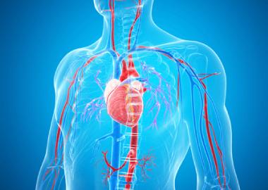 La radiología vascular intervencionista Valencia. Dr. Esteban